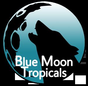 Blue Moon Tropicals Logo